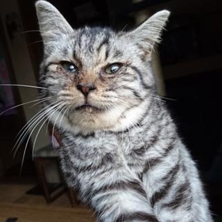 生後2-3週間くらいの子猫です。