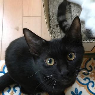 4ヶ月 抱っこ大好き黒猫 タンク
