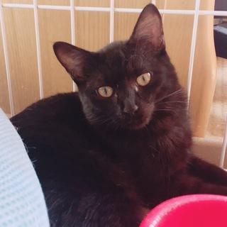 可愛い黒猫ちゃん(*´◒`*)