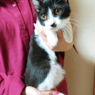 甘えん坊な白黒ハチワレ、長い尻尾の美猫さん