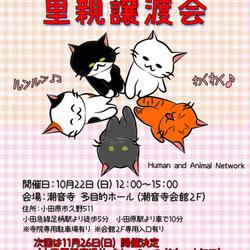 猫の里親譲渡会【小田原】