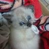 かわいい猫ちゃん