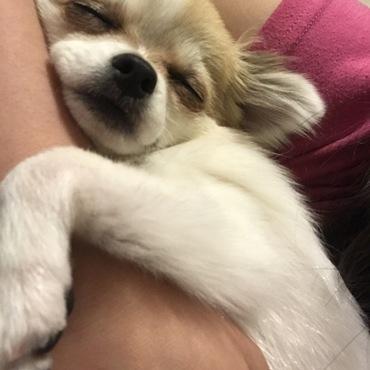 お眠みみちゃん