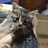 子猫3匹の里親募集