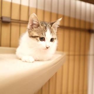 とっても美にゃんな子猫ちゃんです