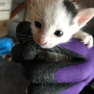 保護している猫が子猫を2匹産みました!