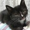 珍しい配色の黒白ちゃん。