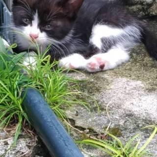 子猫の新しい家族を探してます