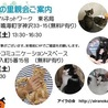 飼い主のいない猫とのお見合い会 堀田 ブラザーコミュニケーションスペースにて