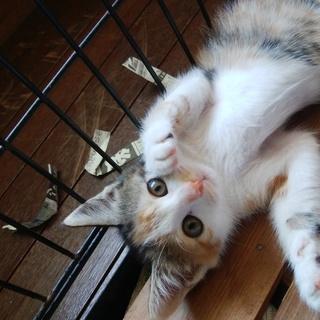 猫の中では珍しい一人っ子のやんちゃ坊主です!