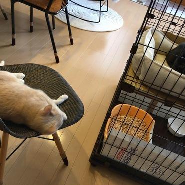 子猫たちを監視する先住猫