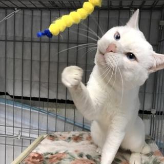 保健所に鞄で遺棄された老白猫の海さん