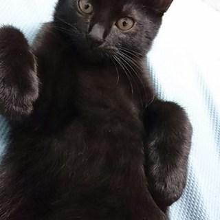 お転婆で甘えん坊の黒猫「胡桃」です