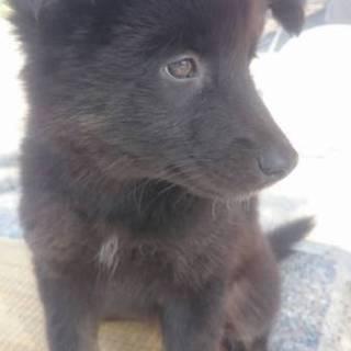 2ヶ月の女の子 モフモフ子熊