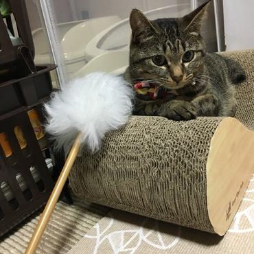 天然羊毛猫じゃらし