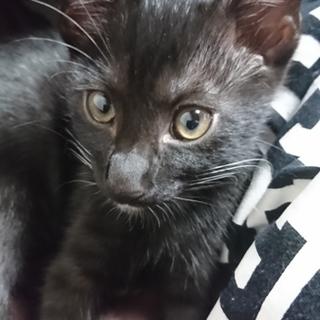 黒猫3ヶ月♂