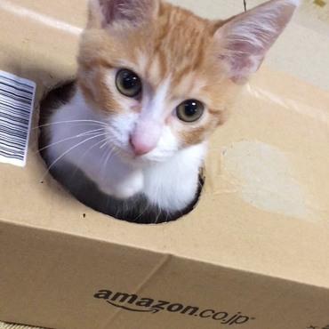 Amazonの箱で、エース君の遊び道具を作りました。 穴を空けただけですか(^o^ゞ