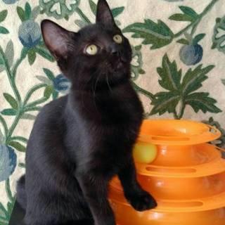 お利口さん女子 黒猫のジジちゃん