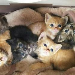 青い鳥動物愛護会「第8回犬猫譲渡会」