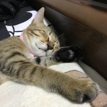 安心して眠るベルンちゃん