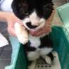 保健所レスキューの交通事故負傷猫★鈴之介