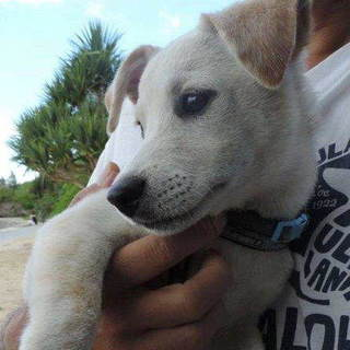 ソルトくん すくすく育った南国男子犬5か月