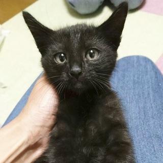 漆黒の天使♡黒猫ジルちゃん 3ヶ月