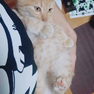 里親募集、4ヶ月ほどの遊び盛りの子猫です!