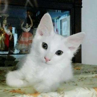 4月生まれの白い中毛バロン君
