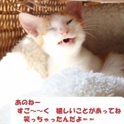 『譲渡会のお知らせ』京都