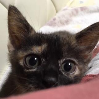 チーカマちゃん、2か月の女の子
