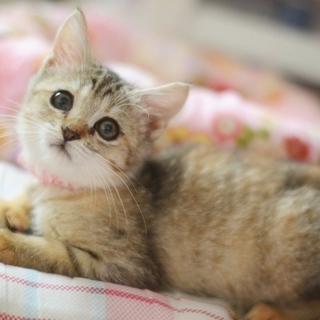 さんちゃんは美猫です