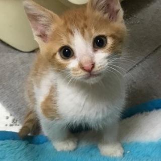 母猫さんが交通事故死、残されてた子猫を保護しました