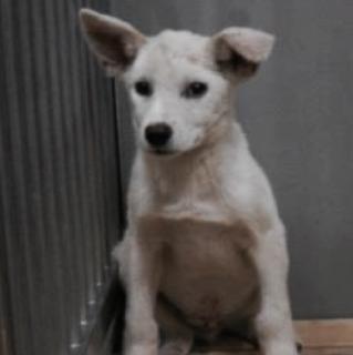里親さんを待っています。成犬♂白