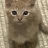 母猫さんが交通事故死、残された子猫を保護しました