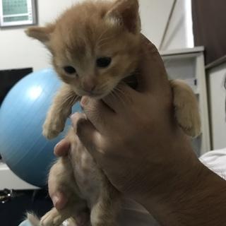 生まれて1ヵ月程の子猫です
