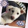 垂れ耳の可愛い仔犬