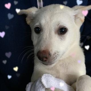 立耳の可愛い仔犬ちゃん