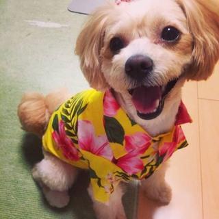 トイプードル・ポメラニアン MIX犬