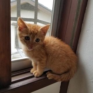 生後2ヶ月の子猫ちゃん
