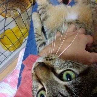 イケメンオス猫の里親さん募集