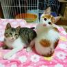 モアナちゃん(左)とチャマくん(右)