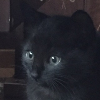 可愛い黒猫4兄弟
