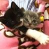 猫(と子猫)の譲渡会