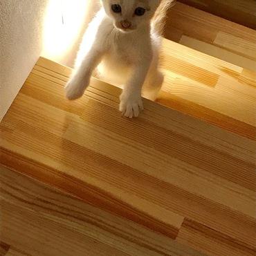 階段もよちよち登れるようになりました♡