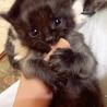 元気一杯!黒猫の子猫ちゃん♪