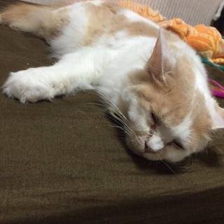 現在32歳の猫ちゃんの里親さん募集