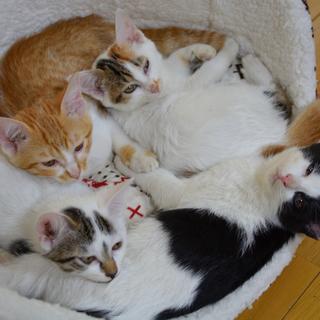 子猫4匹の里親募集