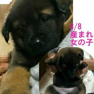 レスキューした母犬が産んだ仔犬の里親募集!