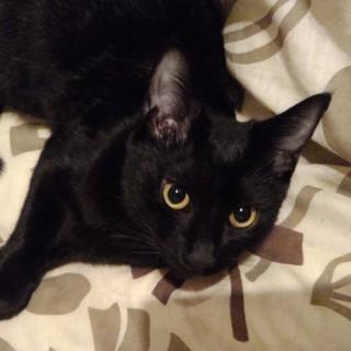 これぞ「ザ・黒猫!」カッコいい女の子